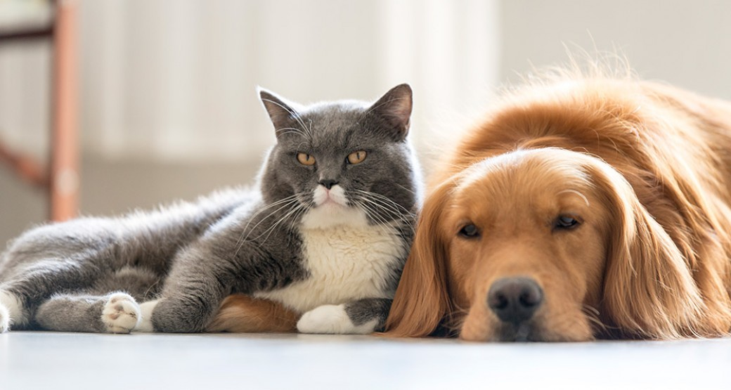 Home Automation for Pets: How Your Security System Can Protect Your Furry Friends