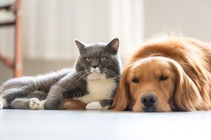home automation for pets